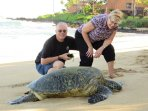 Saying Hello to Honu on the Kuleana South Beach