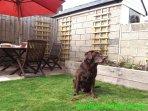 Peel House è animali domestici - (abbiamo preso in prestito accanto porte Labrador 'Bottoni' di questa foto)