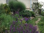 Step outside and wander in our orgnic gardens