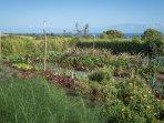 Veggie Garden on the Land