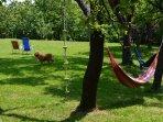 Many hammock places