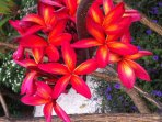 Flowers everywhere all year round. Curacao is a colourful island with colourful people too.