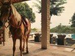 Horse Riding Anyone ?