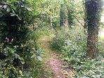 Enjoy a woodland walk through some of our grounds