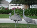 Frequent visitors