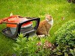 Resident cat (Pumpkin) and his  nemesis