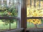 This is the view from out living room double windows toward the back yard.