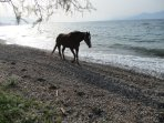A horse of the estate enjoying a free ride by the shore.