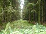 Hartland Forest