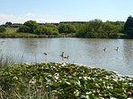 Clifford Water lake