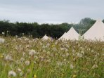 Bell tents from the meadow