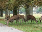 Royal Bushy Park - approx 0.7 mile