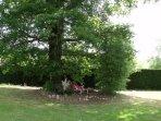 Parc (détente sous le chêne)