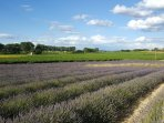 Lavender on our way to Uzes
