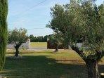 les oliviers centenaires dans le propriété fermée par un grand portail. vue sur les champs
