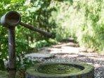 The tranquil Japanese garden.