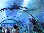 AQUARIUM and iMax-THEATER - Moody Gardens -