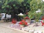 Espace fleuri devant le bungalow