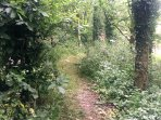 Enjoy a woodland walk through more of our grounds