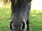 Charley our pony and his camera-shy friend, Camilla are very kid-friendly