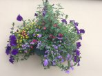 Hanging baskets bring their vibrant seasonal colours to  attract an array of bees and butterflies.