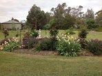 Bottom paddock rose garden