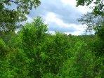 Foresta, Vegetazione, Abete, Albero, Campo