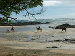 Take a beach` horseback riding tour:)