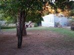 Big, shady back yard. Orange, tangelo, grape vines, pine and pistachio trees. Irrigated often.