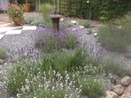 July  Lavender filled Garden in Riverside Retreat Courtyard