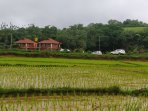 Streamedge sakleshpur- Soaked in Monsoon rains, welcoming you with a green carpet.