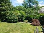 Nice sized backyard for frolicking