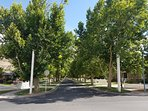 Property street lined with Sycamore trees