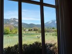 Close up view of Taos Mountain background and horse / cow pasture from living room round table.