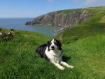 Pembrokeshire Coastal Path only 10 minute walk from the cottages