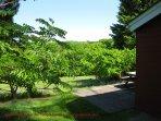 Holly Lodge at Cutkive Wood countryside view