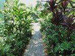 Lush walkway to condo