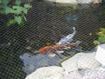 Koi pond, located just next to the pool.