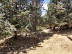 Julian Cabin Trees and oaks
