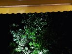 Lit trees at night