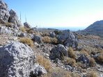 Explore area around acropolis--just a few steps from the house & you are in this lovely wilderness!