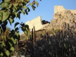 View of the acropolis from the garden--just a few steps away