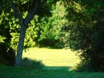 A sunny glade in the grounds