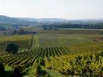Gîte au milieu des vignes