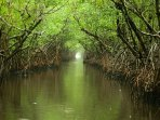 Tour the Everglades - a short 45 minute drive from Sea Mar Condo