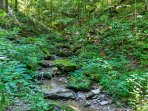 This creek is the perfect sport to hunt for crawdads.