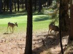 Golf Course views with visitors!