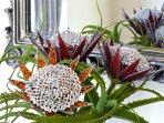 Handmade beaded proteas for decoration