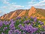 Flatirons in spring, lilacs everywhere in Boulder ... including at our home