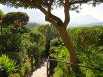 Entry path through green garden